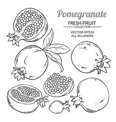 pomegranate fruits set vector image