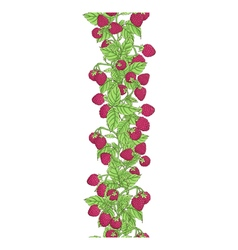 Raspberry border vector