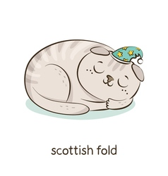 Scottish fold Cat character isolated on white vector image