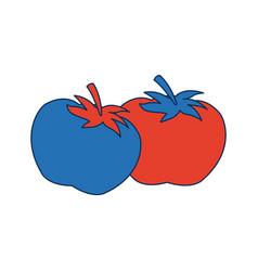 Two ripe tomatoes juicy vegetable fresh vector