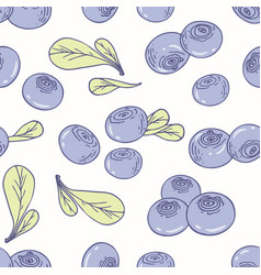 hand drawn seamless pattern with blueberry vector image vector image