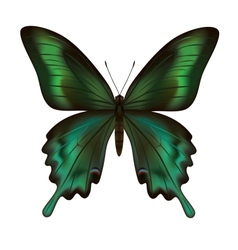 Beautiful realistic green butterfly isolated vector image