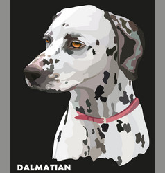 coloful portrait of dalmatian vector image