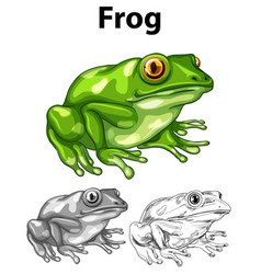 doodle animal for frog vector image