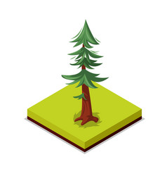 green pine tree isometric 3d icon vector image