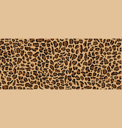 leopard pattern design vector image