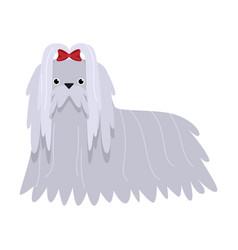 Maltese dog raster in flat cartoon vector
