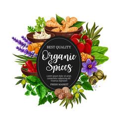 Organic of spices and herbal seasonings vector