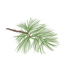pinecone pine tree branch isolated floral vector image