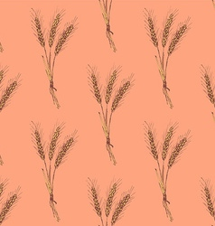 Sketch wheat bran in vintage style vector