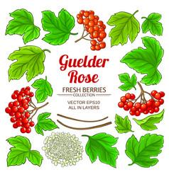 guelder rose elements set on white background vector image
