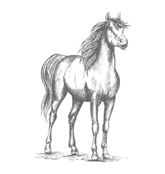 Horse foal or proud stud sketch for racing vector