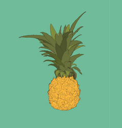 Pine apple tropical fruit sketch vector