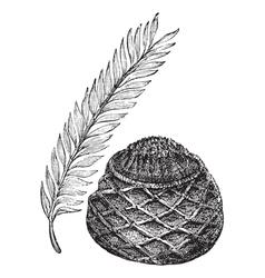 Sago Palm vintage engraving vector