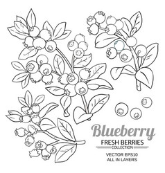 Blueberry plant set on white background vector