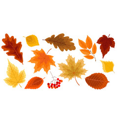 set gold autumn leaves vector image