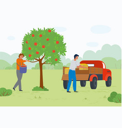 workers in orchard ripe apples transport vector image