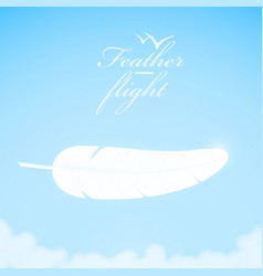 white feather in the sky background vector image