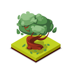 green beech tree isometric 3d icon vector image vector image