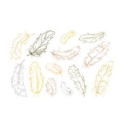 feather bird hand drawn designer elements set vector image