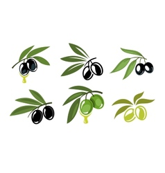 green and black olives vector image