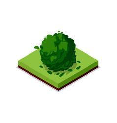 green bush isometric 3d icon vector image vector image