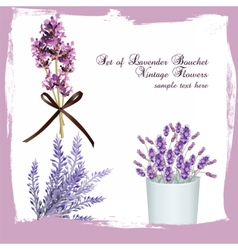 Lavender set bouquet collection vector image