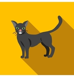 Halloween black cat icon flat style vector image