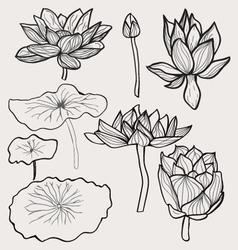 set of Beautiful monochrome hand drawn lotus vector image