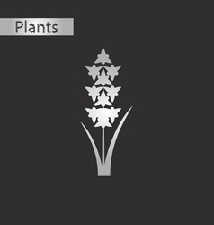 Black and white style icon of gladiolus vector