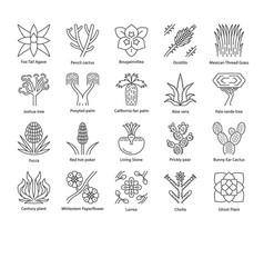 Desert plants linear icons set vector