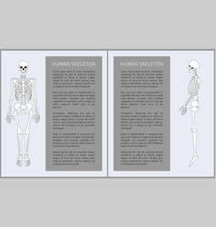 human skeleton posters set vector image