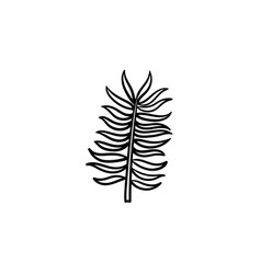 leaves of palm tree hand drawn sketch icon vector image