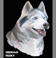 Colorful portrait of siberian husky vector