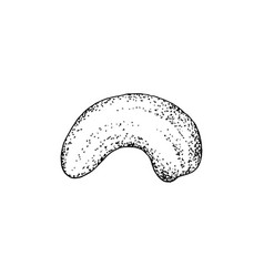 hand drawn cashew nut isolated on white background vector image