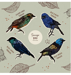 tanager birds collection hand draw sketch vector image