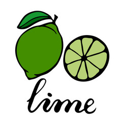 Green ripe lime with one green leaf half a citrus vector