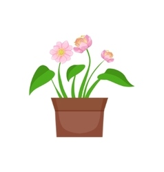 Home pink flower with heart shape leaves in the vector