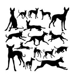 Ibizan hound dog animal silhouettes vector