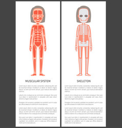 Muscular system and female skeleton colorful card vector