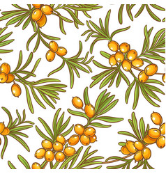 sea buckthorn pattern vector image