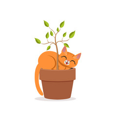 cute funny red cat sleeping in a flower pot with a vector image vector image