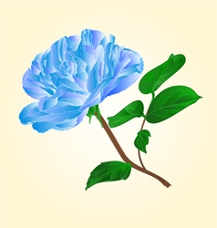 Blue rose stem with leaves and blossoms vector image