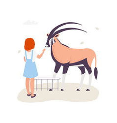 girl touching an antilope in the contact zoo vector image