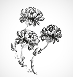 Hand-drawn bouquet of three flowers of peonies vector image