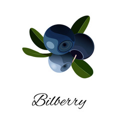 bilberries isolated icon vector image