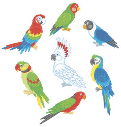 Funny colorful parrots vector