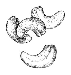 Hand drawn cashew nuts isolated on white vector