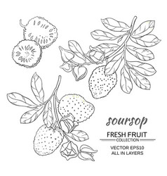 soursop set vector image
