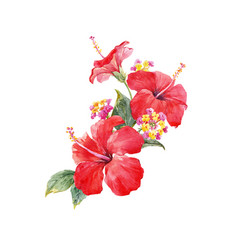 Watercolor hibiscus composition vector
